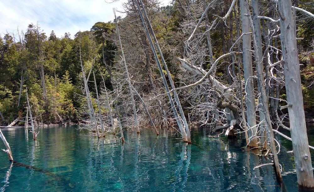 Bosque sumergido (Villa Traful - Neuquén)